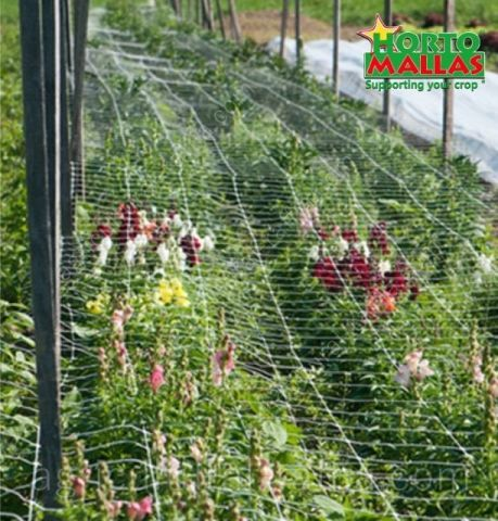 Row of ornamental flowers production with hortomallas trellis netting support system
