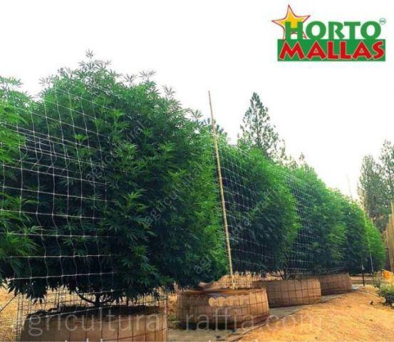 hortomallas trellising net supporting big medicinal bushes