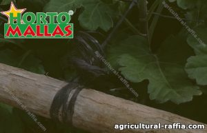 Raffia tied to branch covered by plants